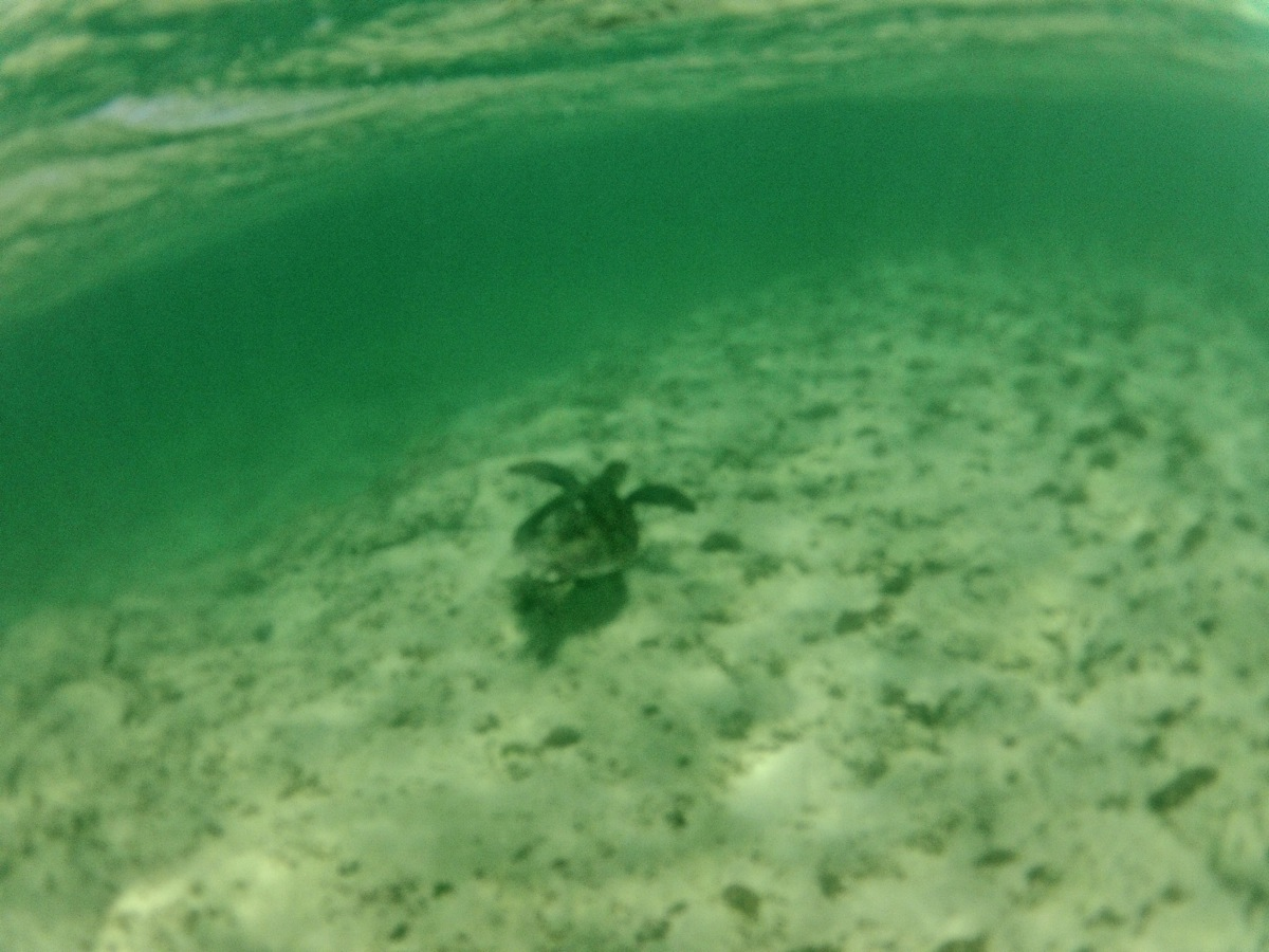 Following our turtle friend on our snorkel!